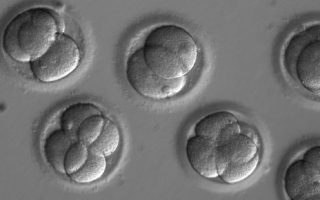 Researchers say CRISPR edits to a human embryo worked