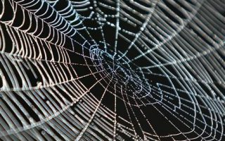 The Snippet: Bio-manufacturing with Spider Silk for pre-term babies