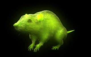 'Invisible' mice reveal anatomical secrets