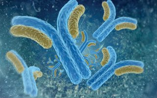 Merck's Antibody for Clostridium Difficile