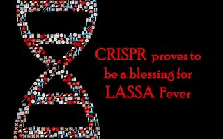 CRISPR proves to be a blessing for LASSA  fever