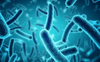 Relation between gut microbes and depression bolstered