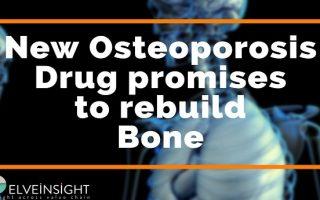 New Osteoporosis Drug promises to rebuild Bone