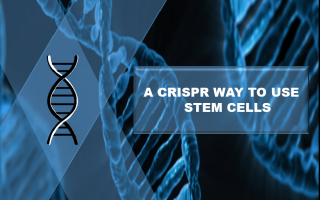 A CRISPR WAY TO USE STEM CELLS