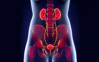 Urinary Tract Infections (UTIs)– How is it affecting the Globe?
